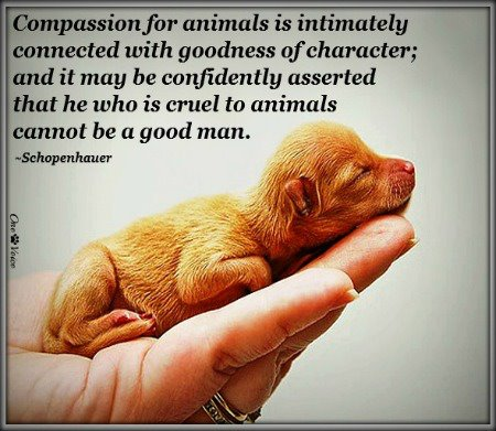 Arthur Schopenhauer's quote #4