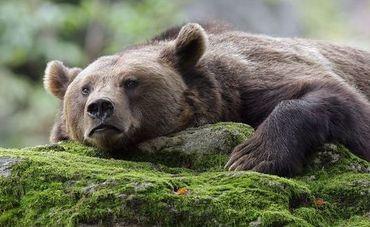 Bears quote #7