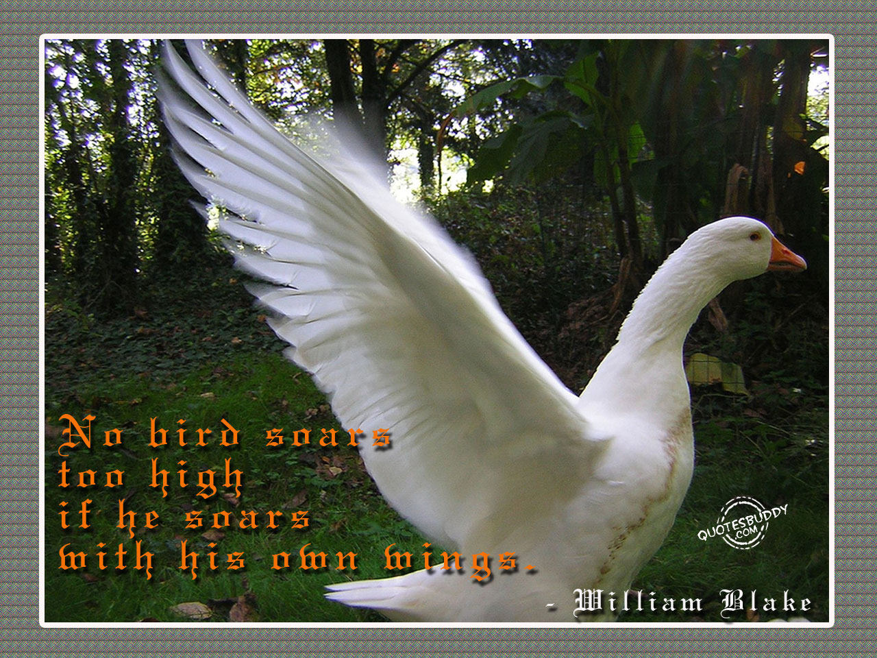 Bird quote #2