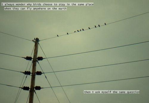 Bird quote #4