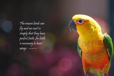 Bird quote #6