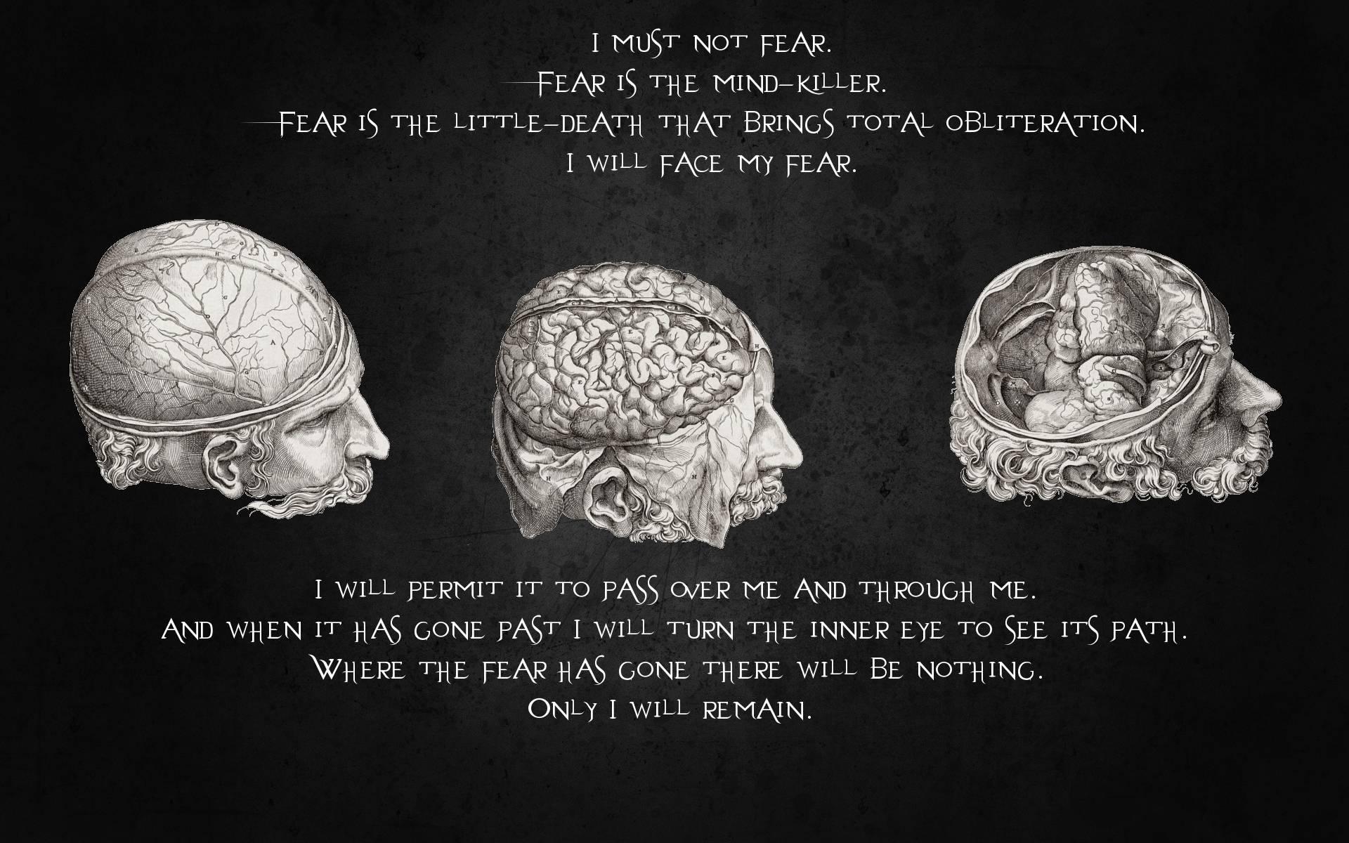 Brain quote #7