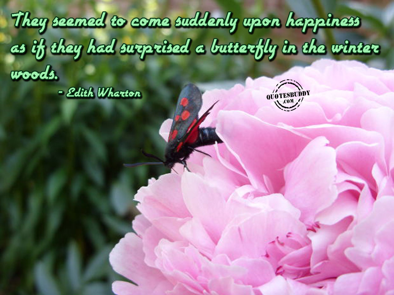 Butterfly quote #3