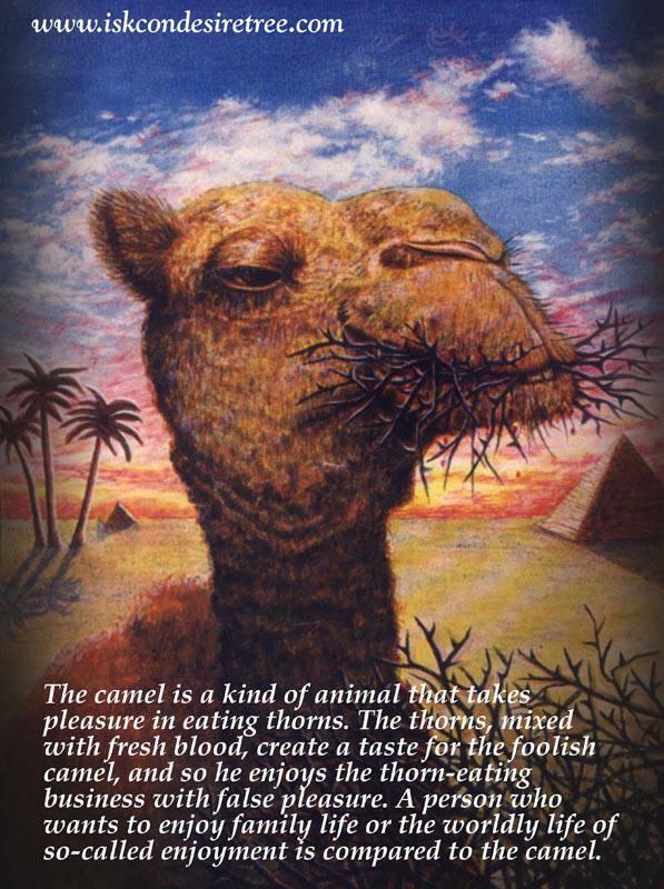 Camel quote #1