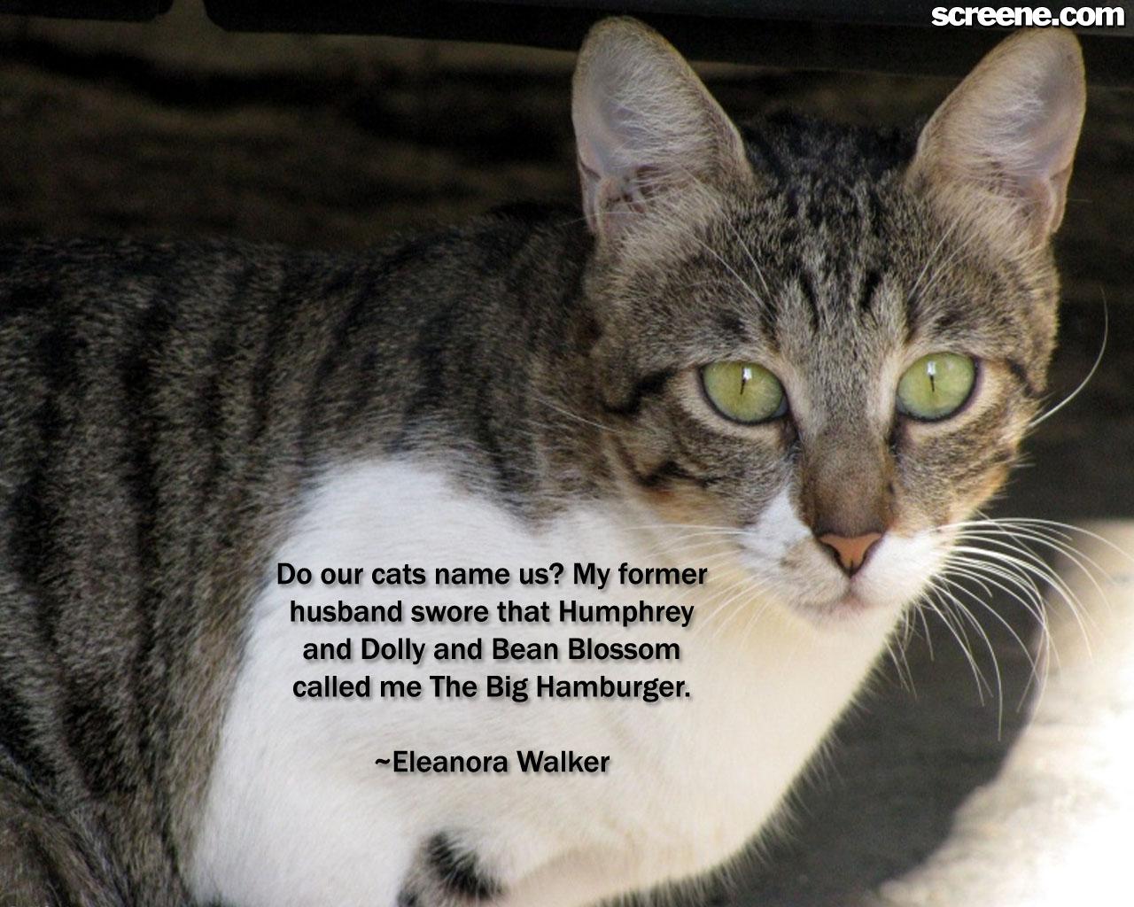 Cat quote #1