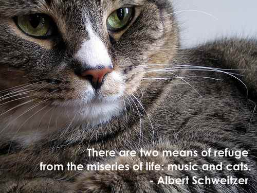 Cats quote #3