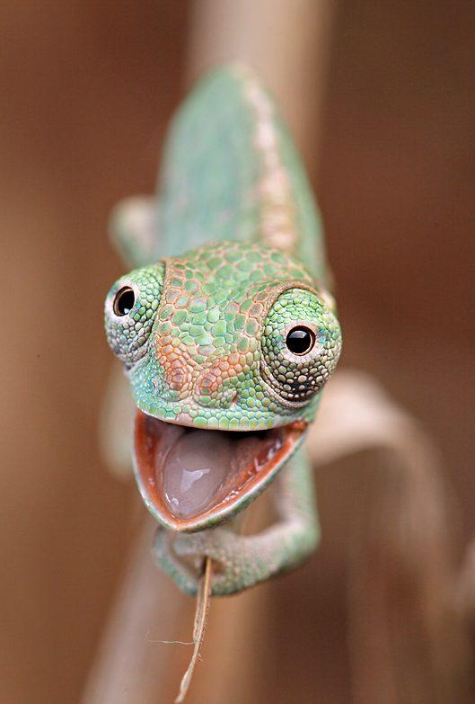 Chameleon quote #3