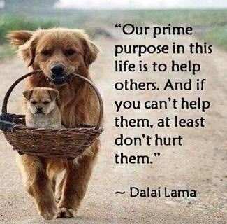 Compassion quote #6
