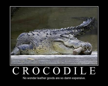 Crocodile quote #1