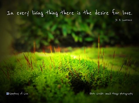 D. H. Lawrence's quote #6