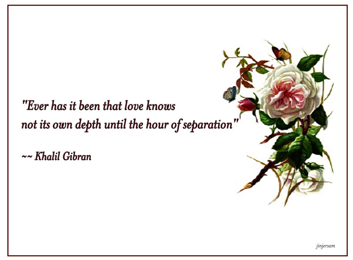 Delicate quote #2
