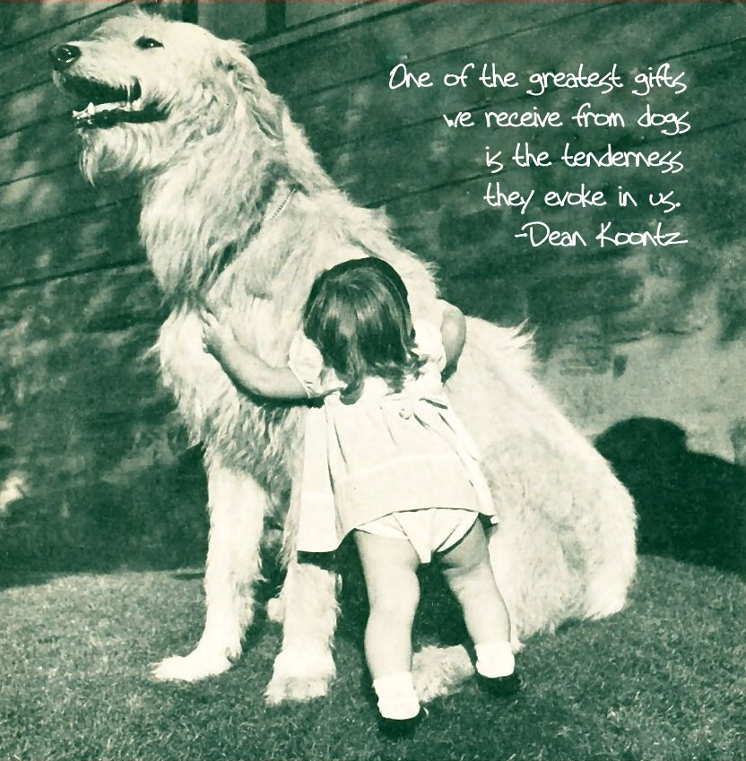 Dog Food quote #2