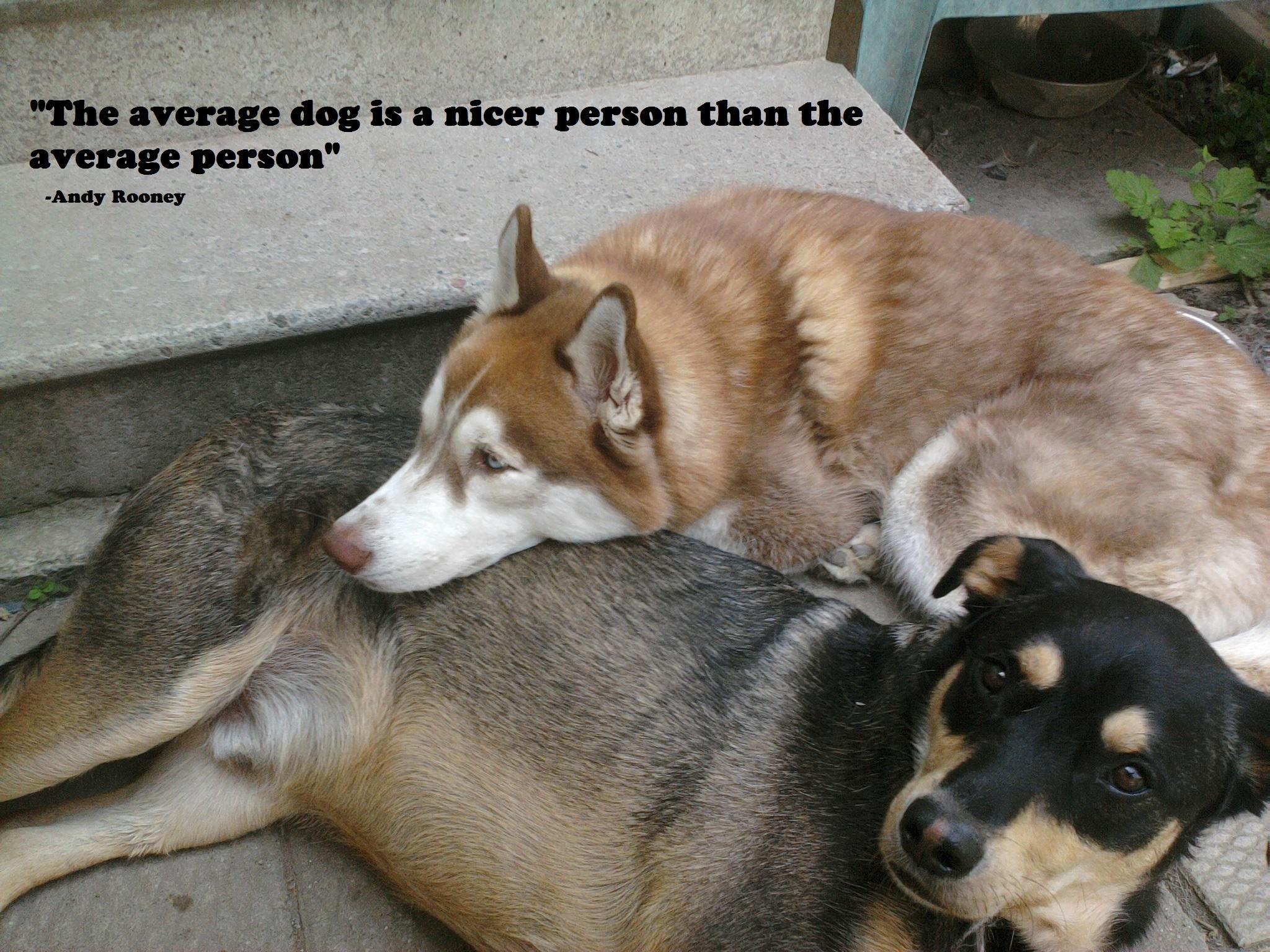 Dog quote #1