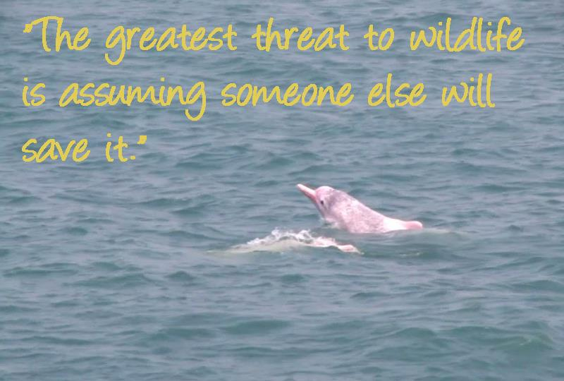 Dolphins quote #2
