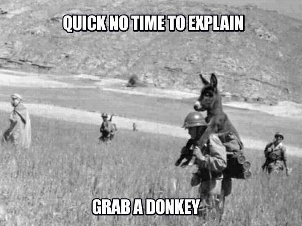 Donkeys quote #2