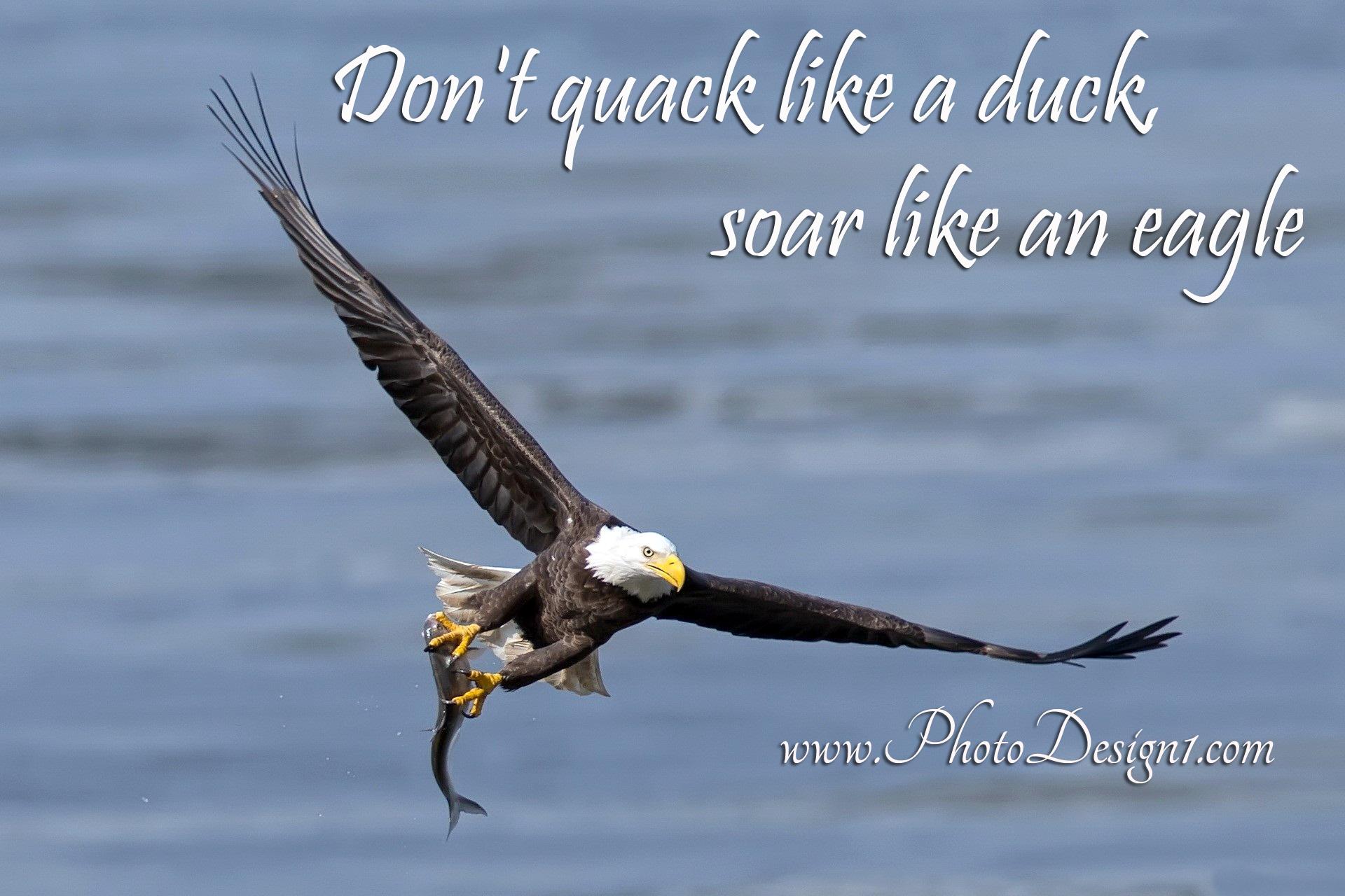 Eagle quote #2