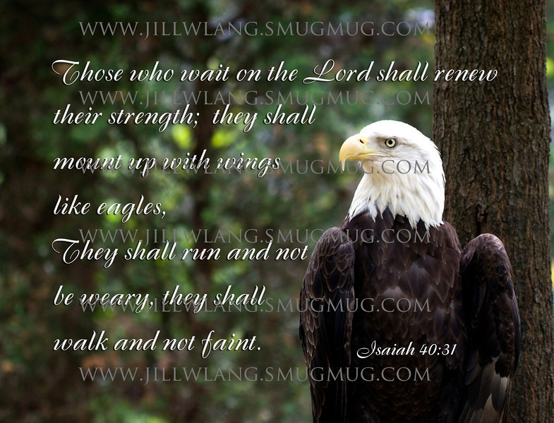 Eagle quote #4