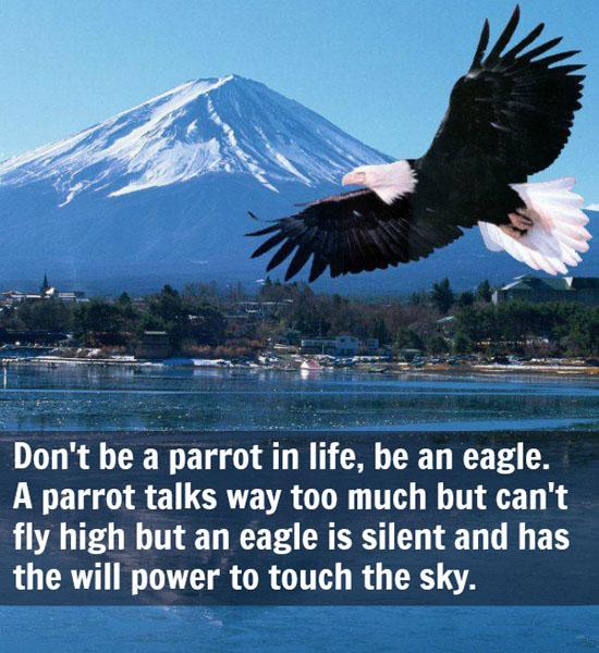 Eagle quote #5