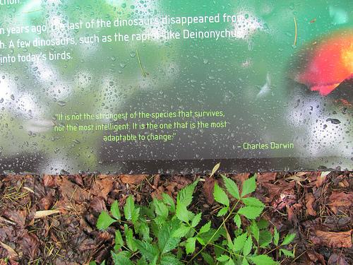 Ecosystems quote #2