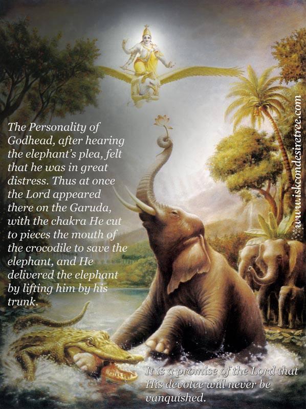 Elephant quote #5
