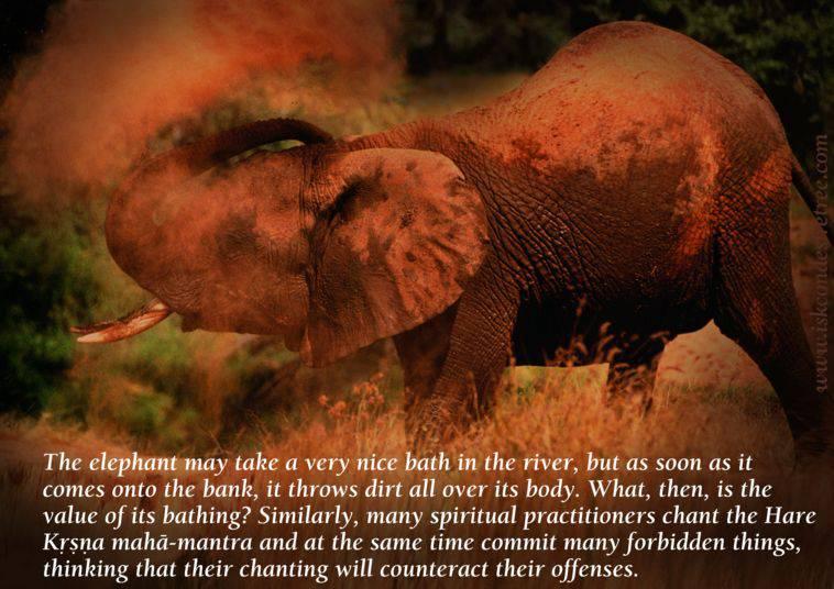 Elephant quote #7