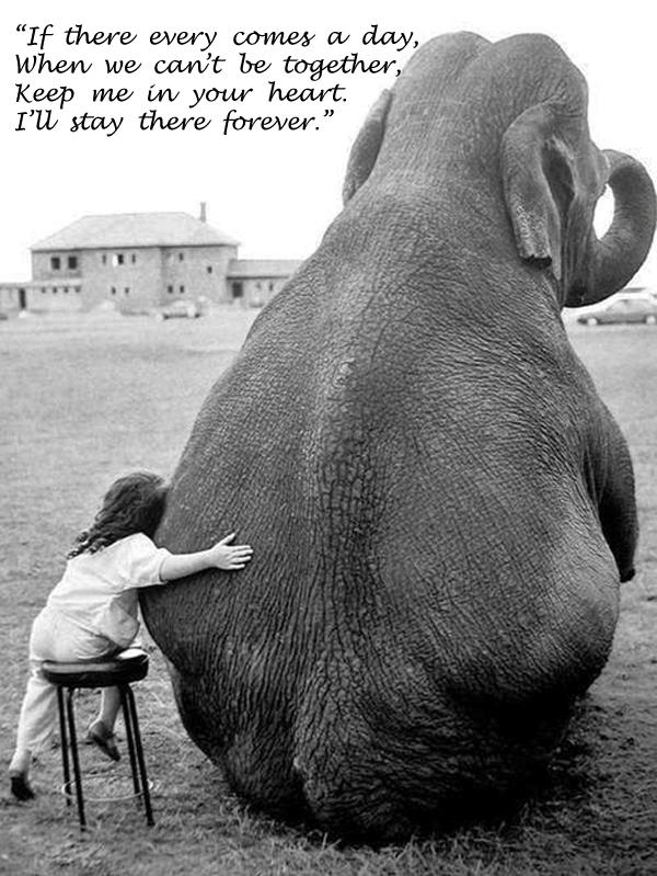 Elephant quote #8
