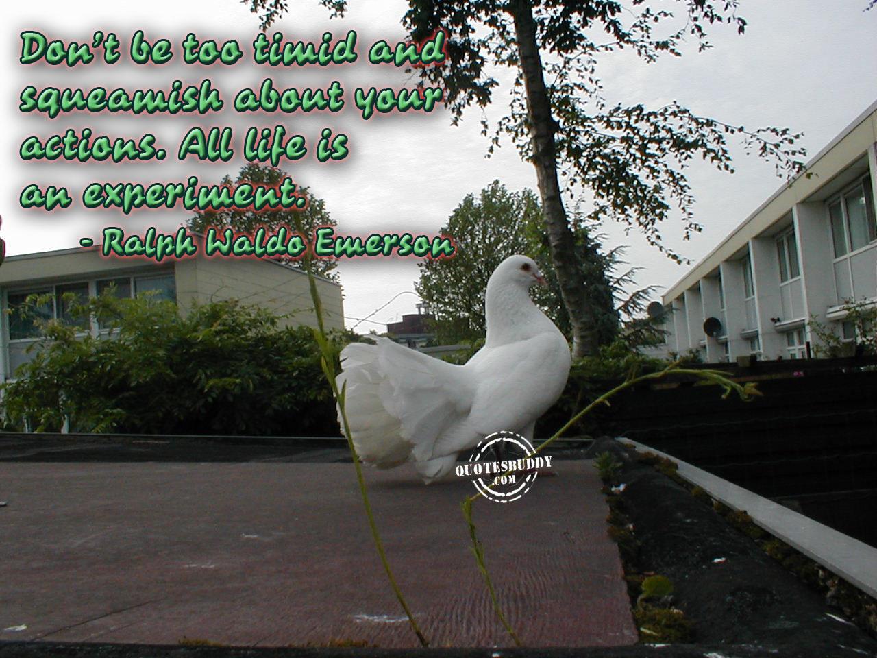 Experiment quote #5