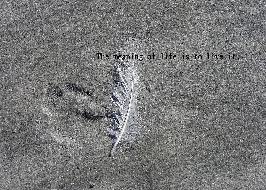 Feather quote #3