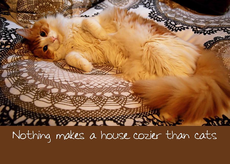 Feline quote #1