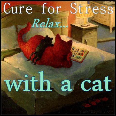 Feline quote #2