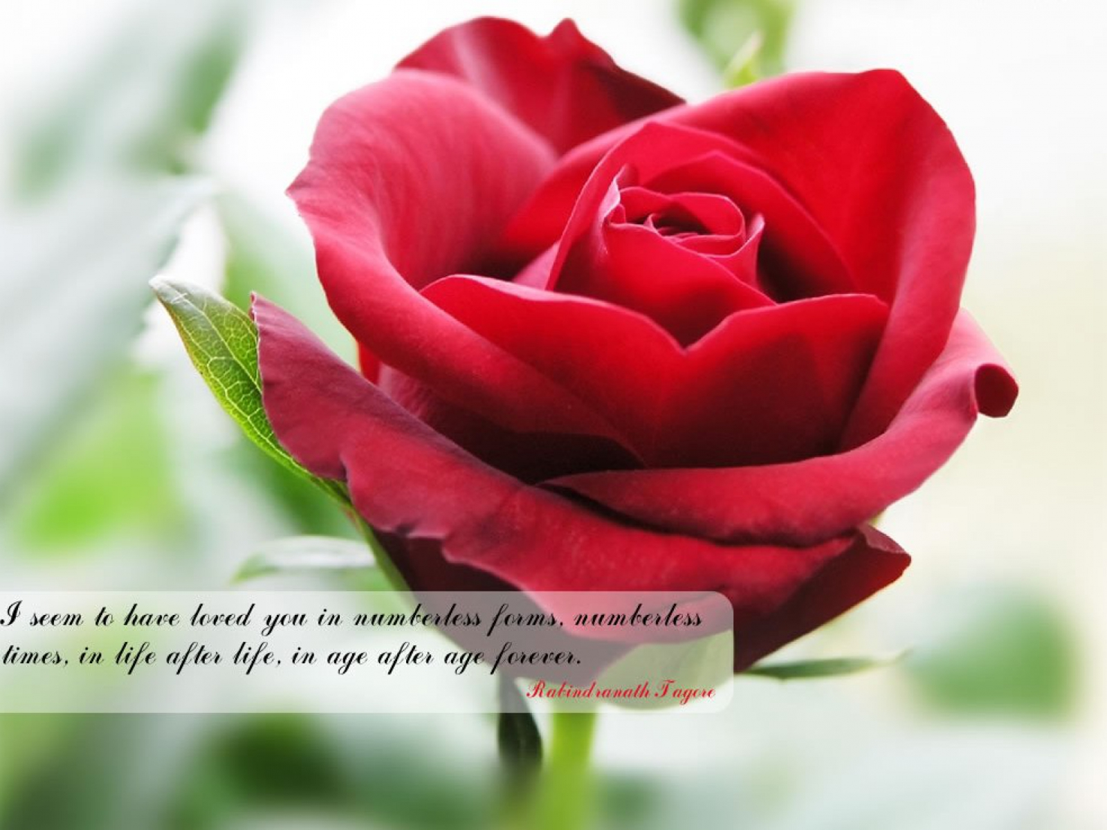 Flower quote #7