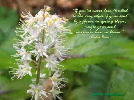 Flower quote #5