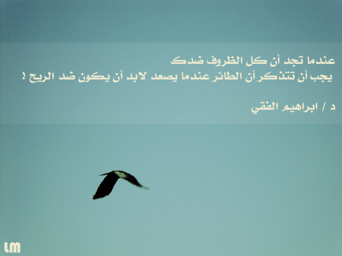 Fly quote #3