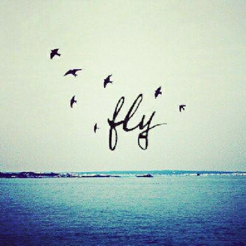 Fly quote #8