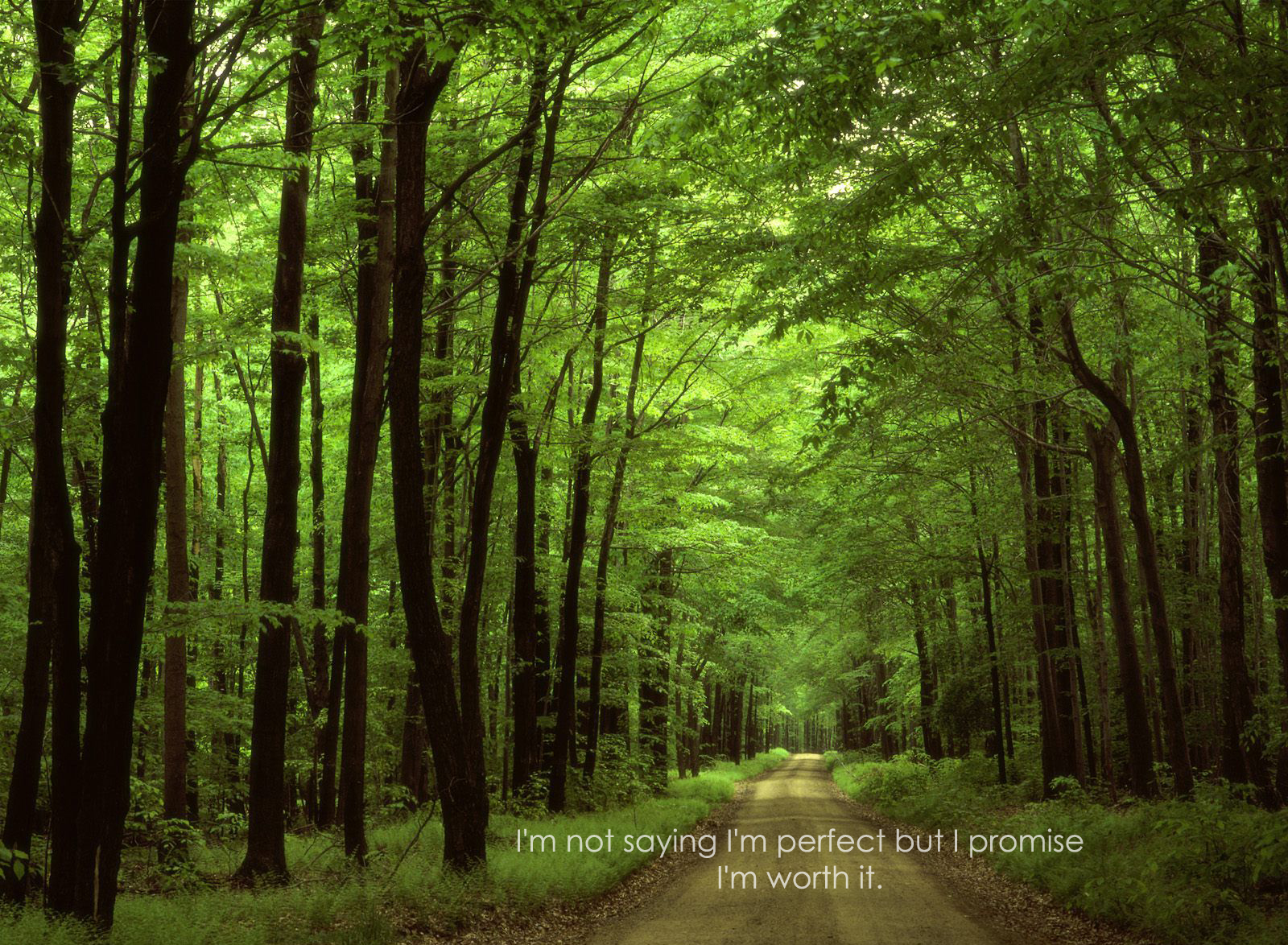 Forest quote #2