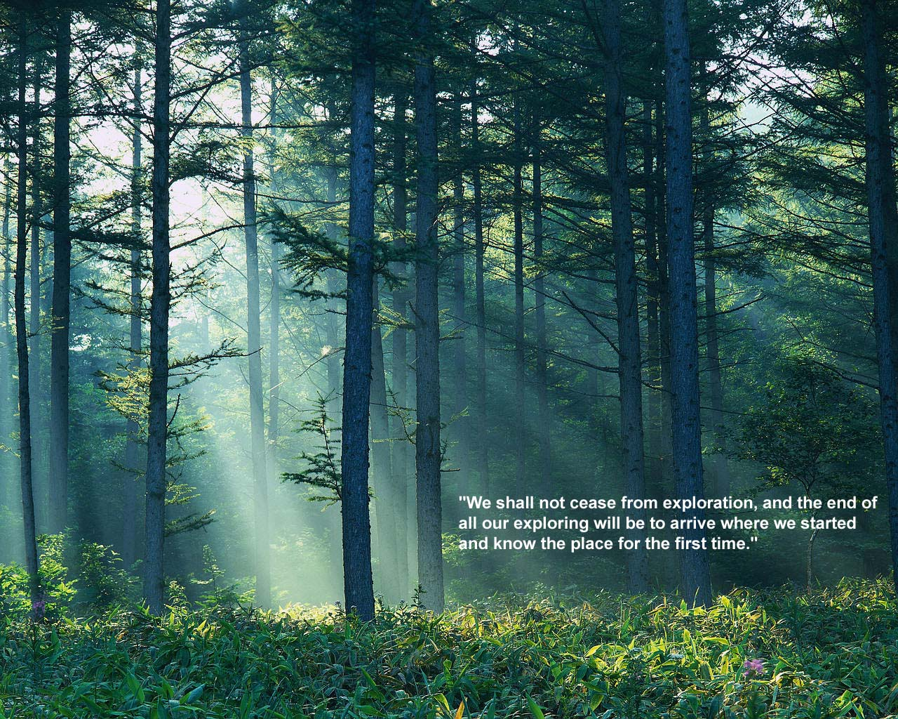 Forest quote #4
