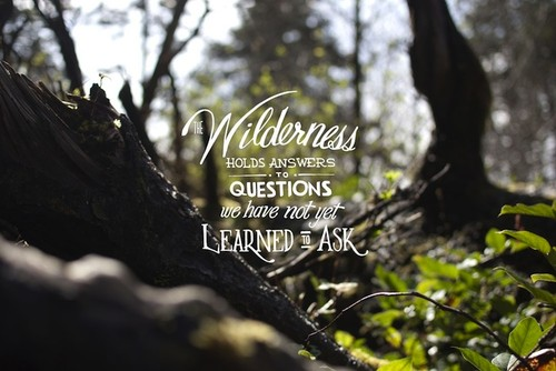 Forest quote #8