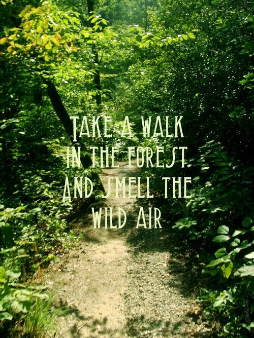 Forest quote #5
