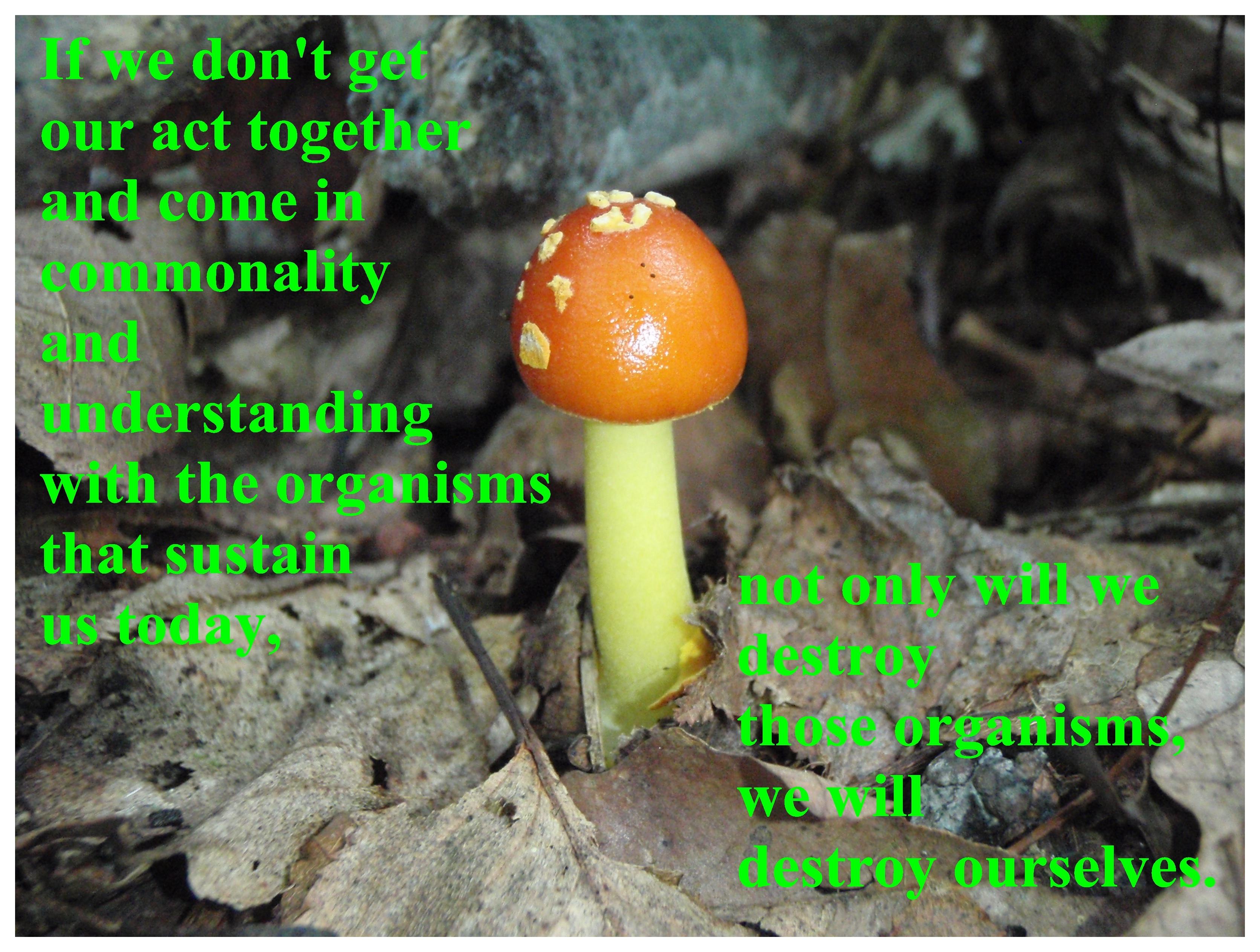Fungus quote #1