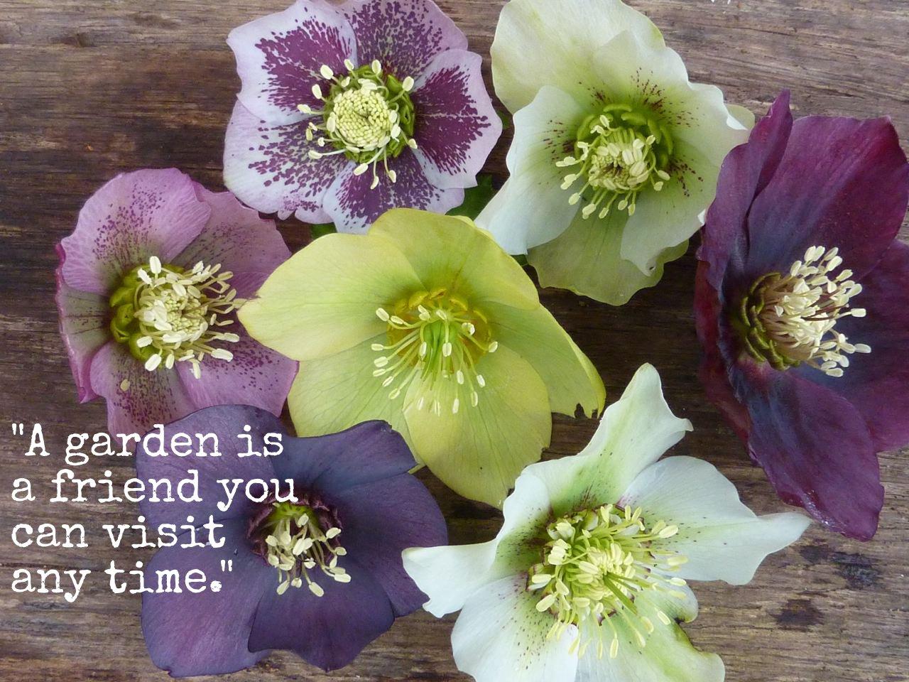 Garden quote #2