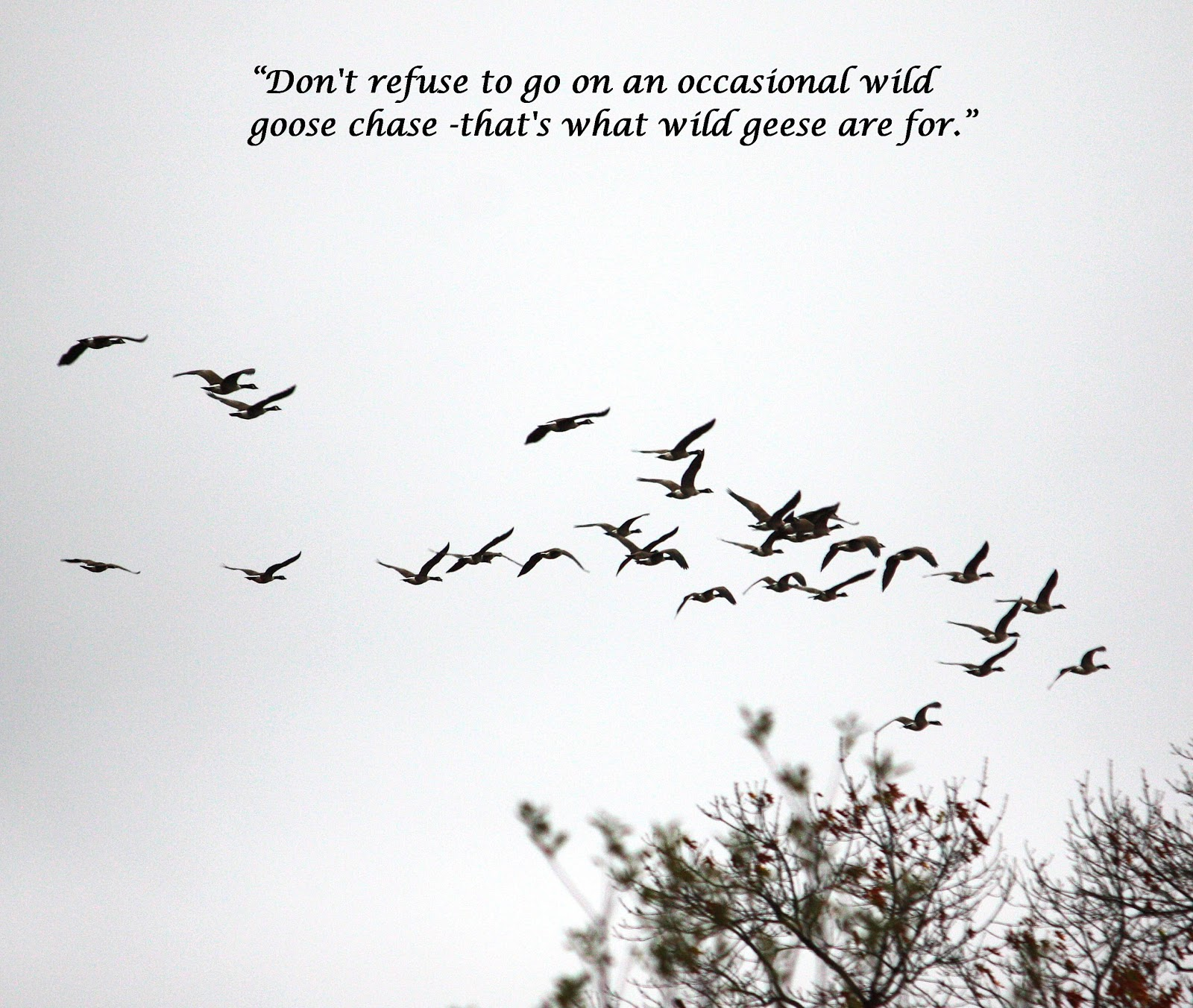 Geese quote #2