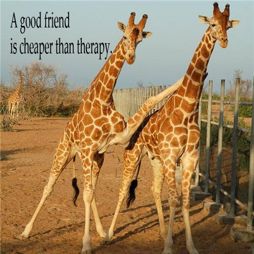 Giraffes quote #1