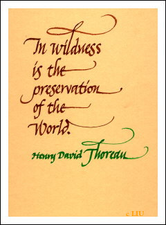 Henry David Thoreau's quote #7