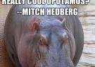 Hippopotamus quote #2