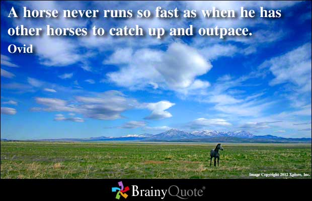 Horses quote #6