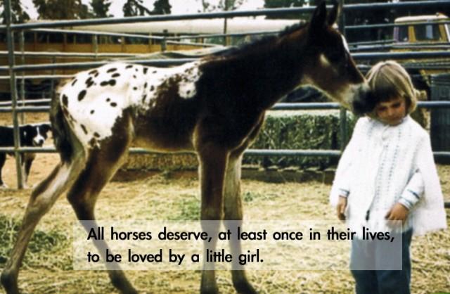 Horses quote #8