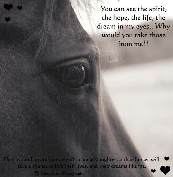 Horses quote #3