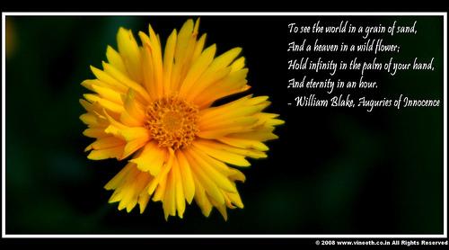 Innocence quote #7