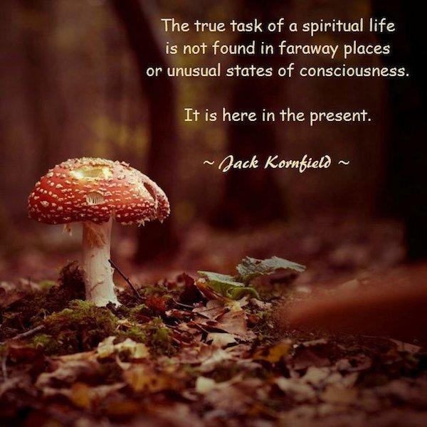 Jack Kornfield's quote #1