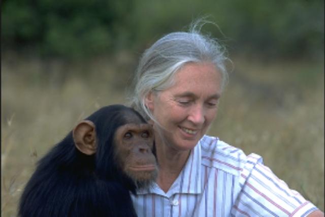Jane Goodall's quote #4